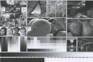 Xerox B210/DNI Side By Side Print/Photo